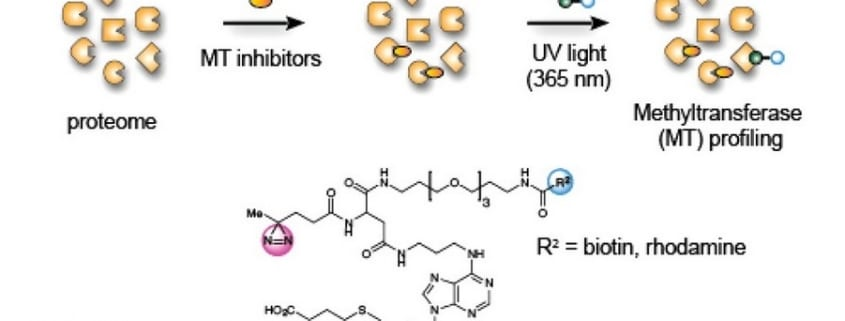 Chemical Proteomic old pub7