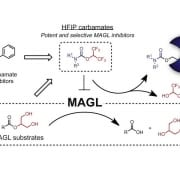 highly selective inhibitors old pub9